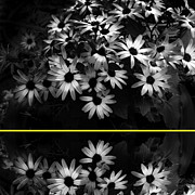 Photo Collage Photo Prints - Daisies with Yellow Stripe Print by Ann Powell