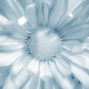 Bright Framed Prints - Daisy - Blue Framed Print by Scott Norris