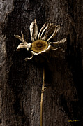 Matthew Turlington - Daisy 2 - 2010