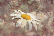 Garry Gay - Daisy Abstract