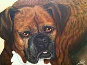 Boxer Painting Framed Prints - Daisy Framed Print by Ana Marusich-Zanor