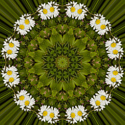 Mandala Photos - Daisy Chain Mandala Series Number 13 by Carrie Cranwill