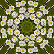 Mandala Photos - Daisy Chain Mandala Series Number 14 by Carrie Cranwill