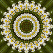 Mandala Photos - Daisy Chain Mandala Series Number 15 by Carrie Cranwill