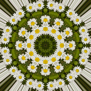 Mandala Photos - Daisy Chain Mandala Series Number 17 by Carrie Cranwill