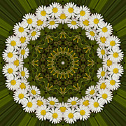 Mandala Photos - Daisy Chain Mandala Series Number 2 by Carrie Cranwill