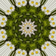Mandala Photos - Daisy Chain Mandala Series Number 3 by Carrie Cranwill