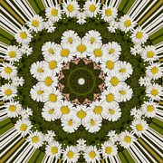 Mandala Photos - Daisy Chain Mandala Series Number 4 by Carrie Cranwill