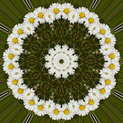 Mandala Photos - Daisy Chain Mandala Series Number 5 by Carrie Cranwill