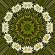 Mandala Photos - Daisy Chain Mandala Series Number 6 by Carrie Cranwill