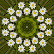 Mandala Photos - Daisy Chain Mandala Series Number 7 by Carrie Cranwill