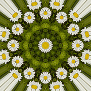 Mandala Photos - Daisy Chain Mandala Series Number 8 by Carrie Cranwill