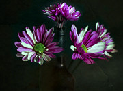 Wine Bottle Digital Art - Daisy Daubs by Peter Chilelli