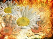 Floral Digital Art - Daisy Delight by Donald Davis