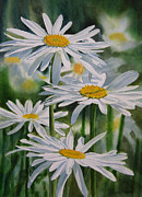 Daisy Art - Daisy Garden by Sharon Freeman