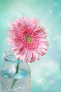 Pink Metal Prints - Daisy Love Metal Print by Amy Tyler