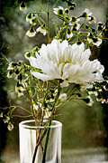 White Flower Photos - Daisy Mum  3 by Angelina Vick