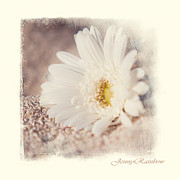 Original Watercolor Photos - Daisy on Sand. Elegant KnickKnacks from JennyRainbow by Jenny Rainbow
