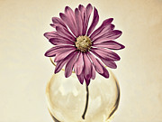 Beige Glass Framed Prints - Daisy Framed Print by Swank Photography