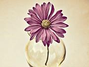 Swank Photography - Daisy