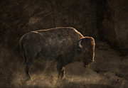 Bison Digital Art - Dakota Proud by Diana Allison