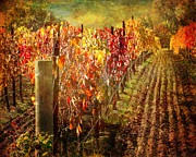 Grapevines Prints - Dalla Terra Vineyard Print by Karen  Burns