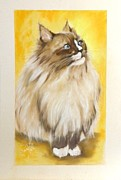 Cat Pastels - Dallas My Ragdoll Kitty by Sandra Valentini