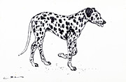 Dog Walking Drawings Prints - Dalmatian dog Print by Kurt Tessmann