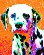 Puppies Digital Art Framed Prints - Dalmation Dog 20130125v2 Framed Print by Wingsdomain Art and Photography