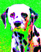 Puppy Digital Art Framed Prints - Dalmation Dog 20130125v3 Framed Print by Wingsdomain Art and Photography