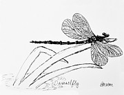 Dragonflies Drawings - Damsel Fly by Becky Mason
