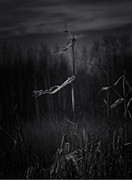 Cornfield Photos - Dance of the Corn by Susan Capuano