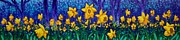 Green Field Paintings - Dancing Daffodils  by John  Nolan
