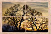 Colorful Photos Posters - Dancing Forest Trees Picture Window Frame Photo Art View Poster by James Bo Insogna