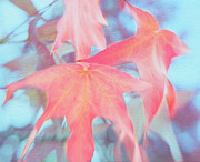 Tangerine Prints - Dancing Leaves Print by Irina Wardas