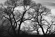 Bo Insogna Framed Prints - Dancing Trees Black and White Sunset Framed Print by James Bo Insogna
