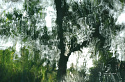 Water Reflections Photos - Dancing Trees by Donna Blackhall