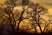 Photography Prints Prints - Dancing Trees Golden Sunset Print by James Bo Insogna