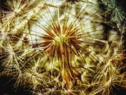 Beauty In Nature Mixed Media Prints - Dandelion Print by Todd and candice Dailey