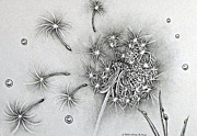 Dandelion Drawings - Dandelion by Catherine Henningham Puttick