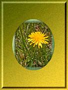 Dandelion Daisy Print by Patricia Keller