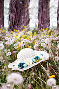 Tall Hat Prints - Dandelion Field Print by Stephanie Frey