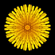 David J Bookbinder - Dandelion Flower Mandala