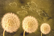 Blowing Prints - Dandelion Heads Print by Christopher Elwell and Amanda Haselock