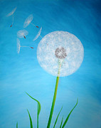 Pusteblume Paintings - Dandelion in the summer by Sven Fischer