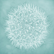 Jennie Marie Schell Art - Dandelion Macro Abstract Aquamarine by Jennie Marie Schell