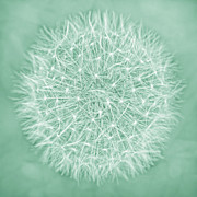 Jennie Marie Schell Art - Dandelion Macro Abstract Teal Green by Jennie Marie Schell