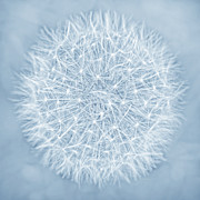 Jennie Marie Schell Art - Dandelion Marco Abstract Blue by Jennie Marie Schell