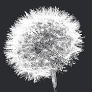 Emily Enz - Dandelion Pop Black and...