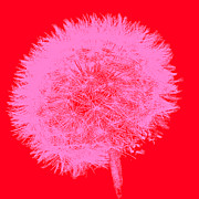 Emily Enz - Dandelion Pop Red and...
